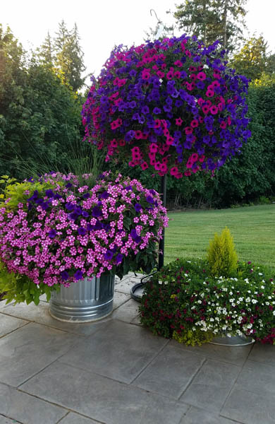 Hanging Baskets - Plants