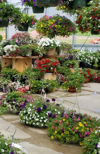 Patio Pots - Garden Center